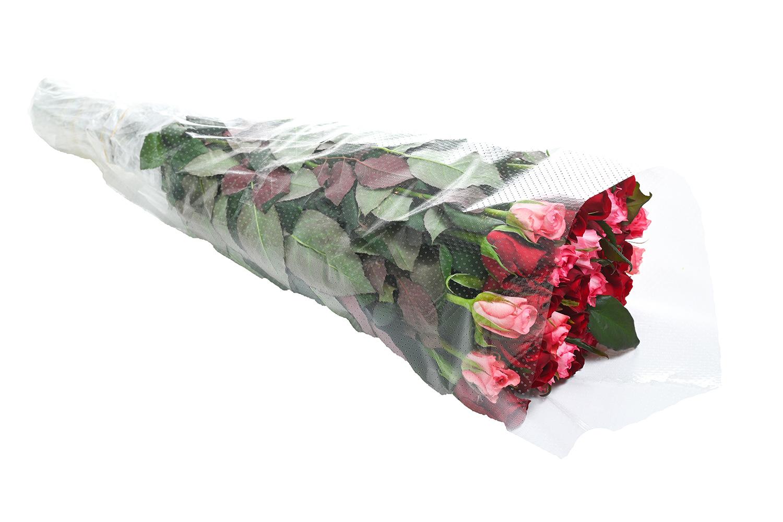 rose_1